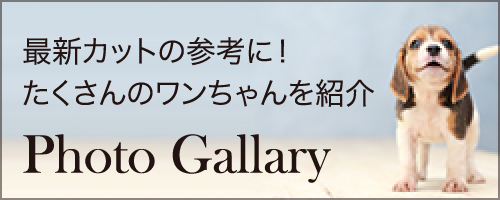 最新カットの参考に!たくさんのワンちゃんを紹介 Photo Gallary