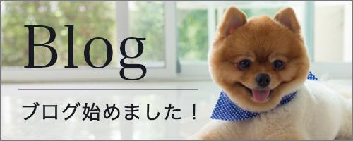Blog ブログ始めました